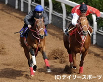 NHKマイルC・追い切り情報(1)グランプリボス